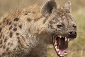اصوات الحيوانات عالم الحيوانات