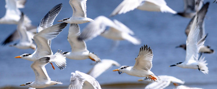 طيور البحر عالم الحيوانات
