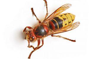 الحشرات عالم الحيوانات