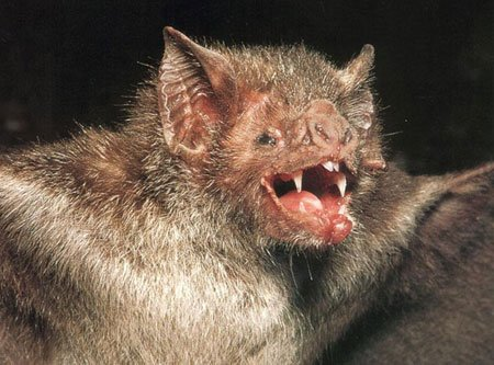 bat 1 The 10 Most Horrific Animals That Scare People