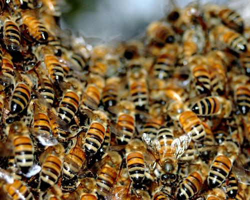 bee 1 The 10 Most Horrific Animals That Scare People