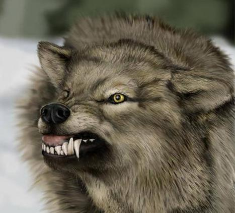 wolf 1 The 10 Most Horrific Animals That Scare People