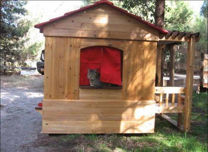 cat city 8 Luxurious place for cats
