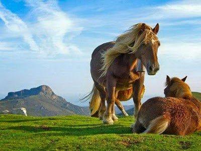 Amazing Animal 1 20 Amazing Animal Photography Shots