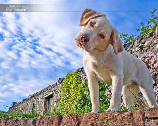 Amazing Animal 16 20 Amazing Animal Photography Shots