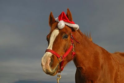 Merry Chrstimas To All The Animals 13 Merry Christmas To All The Animals