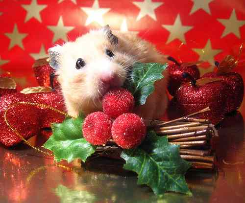 Merry Chrstimas To All The Animals 3 Merry Christmas To All The Animals