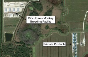 TheirTurn map shows proximity of BioCulture and Primate Products facilities.