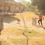 How BAWA beat the dog-cullers in one Bali banjar