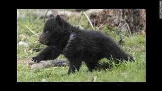140626122135-bern-zoo-bear-horizontal-gallery