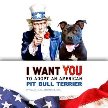 Asheville Humane Society 4th of July pit bull promo.