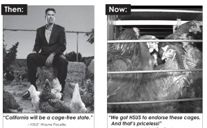 Images from Humane Farming Association ads criticizing the language that the Humane Society of the U.S. has accepted in promoting caging standards for laying hens.