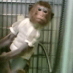 """Leading monkey lab accused of """"fatal negligence"""""""