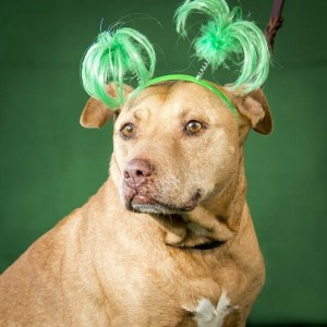 (SDHS & SPCA photo)
