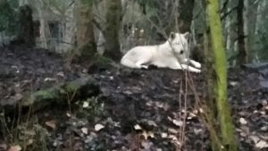 Wolf. (Beth Clifton photo)