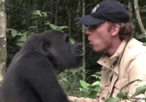 Damien Aspinall with gorilla. (From YouTube video)