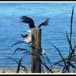 Life & death decision at Hidden Beach
