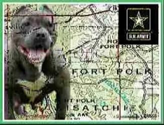 Fort Polk pit bull