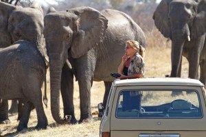 Sharon Pincott observing elephants. (Courtesy of Sharon Pincott)