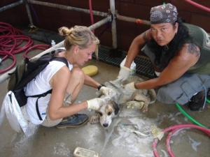Volunteers wash a newly arrived dog at the Lamar-Dixon rescue center on September 21,  2005.  (M.C.)