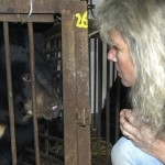 China's largest bear bile producer is chickening out of the market