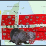 A Denmark map with covids and a mink