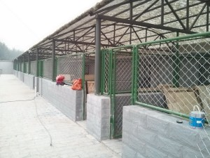 Animal Rescue Beijing shelter under construction in 2013.