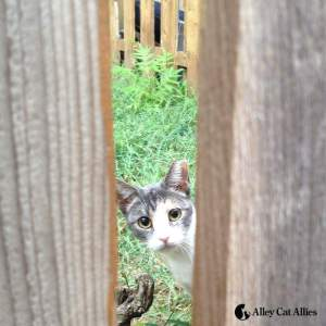 AcA peeking cat