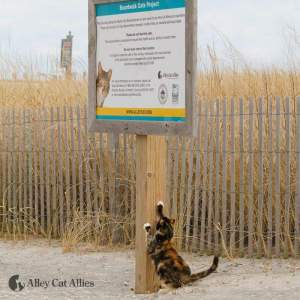 Atlantic City cat