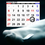 Dark day in November for Canada's embattled marine mammal parks