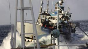 The Sea Shepherd vessel Bob Barker during the 2014 Antarctic campaign against Japanese whaling.