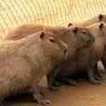 Infighting among animal advocates