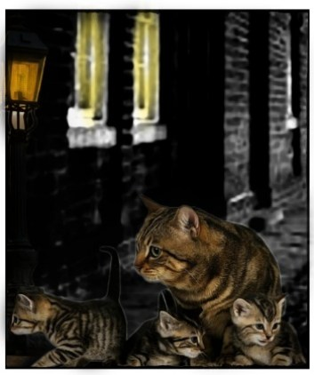 Cat and kittens in an alley