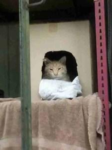 Cat in cubby