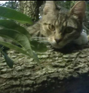 Cat looking over log.  (Beth Clifton)