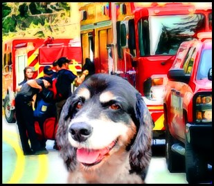 Central Whidbey Fire rescues Buster the dog