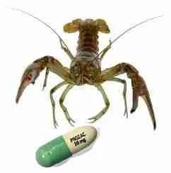 Crayfish with Prozac