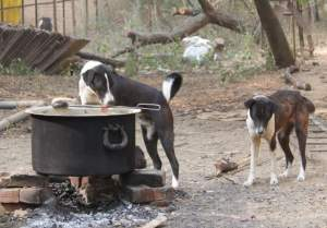 (Eileen Weintraub/Help Animals India photo)