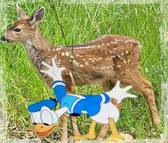 Fawn deer with Donald Duck