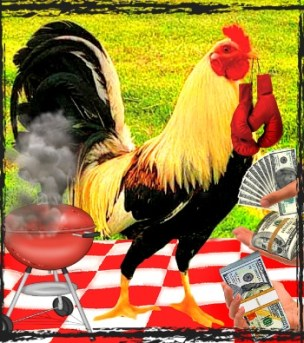 Fighting rooster at a picnic