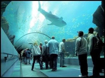Georgia Aquarium tunnel