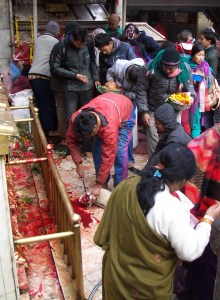 Goat sacrifice at Dakchankali Temple near Kathmandu.  The heads of chickens sacrificed earlier may be seen at left.