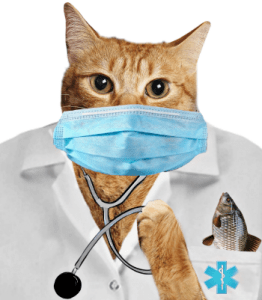 Lab cat wearing a lab coat