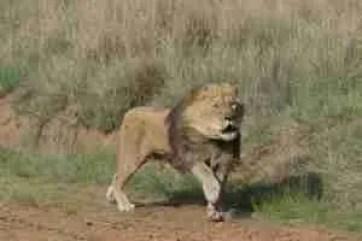 Vier Pfoten/Lionsrock Sanctuary