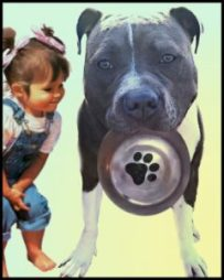Little girl and a pit bull