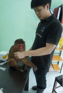 ACRES executive director Louis Ng with rescued macaque.