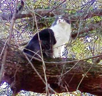 M the cat set to win the buck pool. (MC)