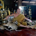 "Thai ""Tiger Temple"" losing stripes"