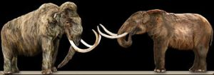 Woolly mammoth & mastodon. (Wikipedia photo)
