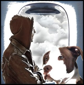 Man and pit bull on plane